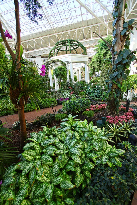 Wedding Venues | Gaylord Opryland Hotel | She's Intentional: The Dainty Jewell's Blog